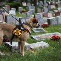 Normativa di riferimento per la progettazione di cimiteri per piccoli animali